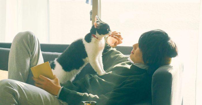 the-traveling-cat-chronicles-sota-fukushi-cover