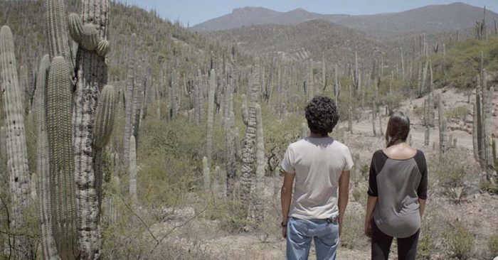 dos-cactus-angélica-romanini