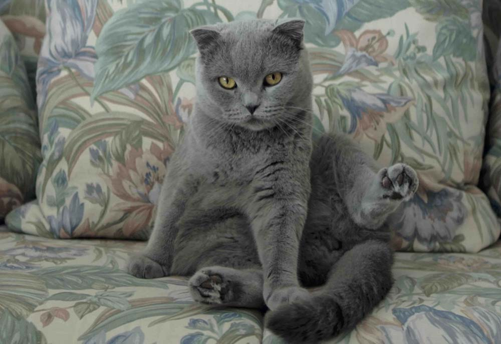All-cats-are-grey-in-the-dark