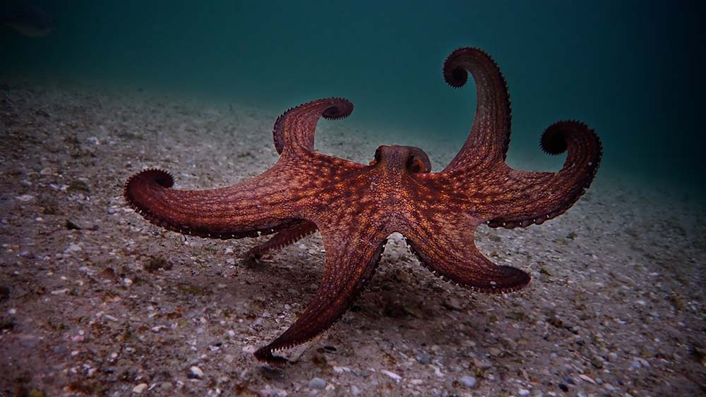 my-octopus-teacher